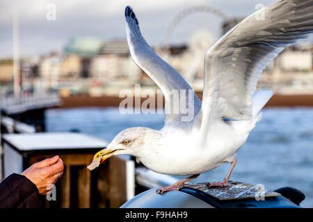 A Woman Feeding A Seagull, Brighton Pier, Brighton, Sussex, UK - Stock Photo