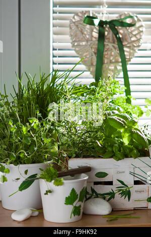 decoupage motive with herbs - Stock Photo