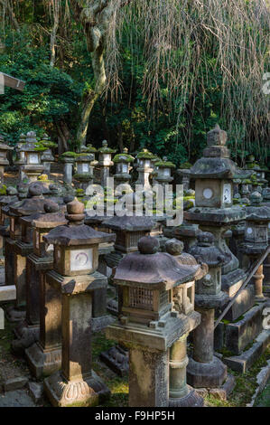 JAPANESE STONE LANTERNS ON DISPALY, KASUGA TAISHA SHRINE (768), NARA, JAPAN - Stock Photo