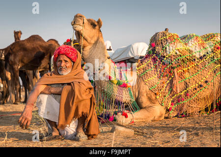 Portrait of a senior Rajasthani resting in front of his camels, Pushkar Camel Fair, Rajasthan, India - Stock Photo