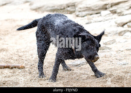 Dog shaking off water - Stock Photo