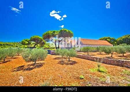 Island of Vis olive fields, Dalmatia, Croatia - Stock Photo
