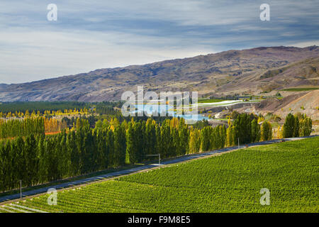 Mt Difficulty Vineyards and orchards, Bannockburn, near Cromwell, Central Otago, South Island, New Zealand - Stock Photo