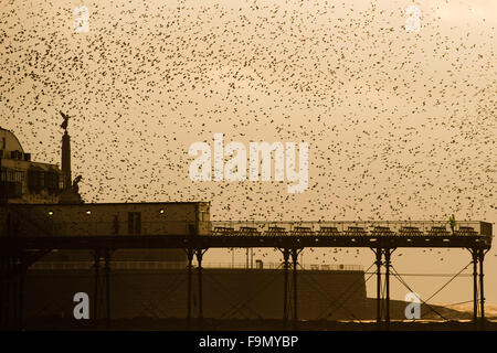 Aberystwyth, Wales, UK. 17th December, 2015.   A huge flock of starlings perform spectacular displays in the air - Stock Photo