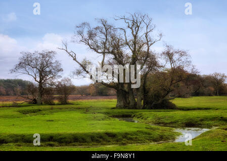 Longwater Lawn, New Forest, Lyndhurst, Hampshire, England, UK - Stock Photo