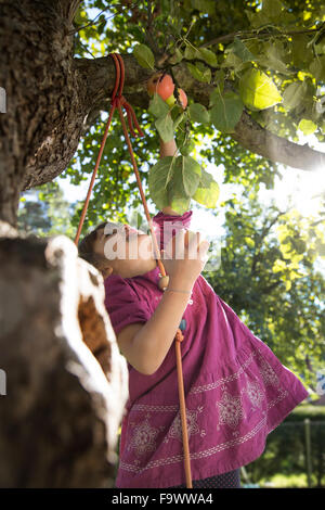 Girl reaching for an apple on tree - Stock Photo