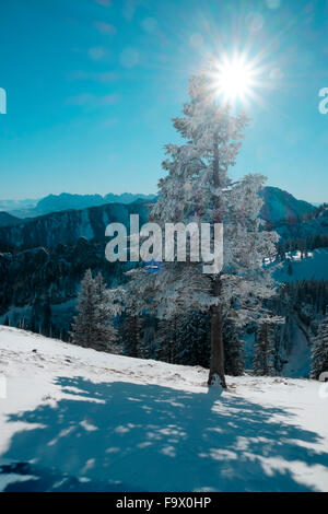 Germany, Bavaria, Chiemgau, Kampenwand, tree in winter landscape in backlight - Stock Photo