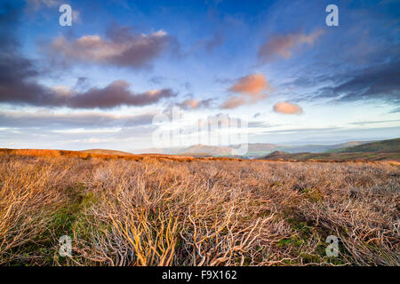 Colorful Sunset Clouds Over Dry Heather Hill - Stock Photo
