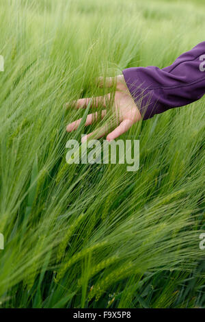 Hand of teenage girl touching spikes in a barley field - Stock Photo