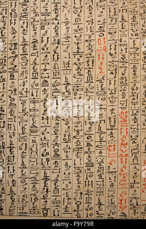 Egyptian Hieroglyphs On Papyrus