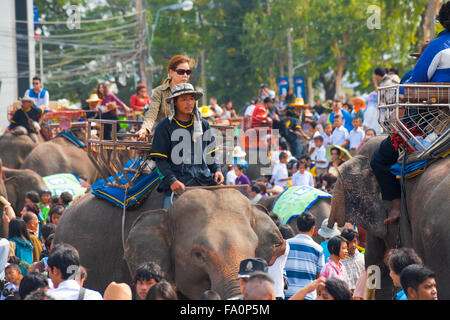 Female Thai passenger riding on elephant back in a large crowd of people and animals at the annual Surin Elephant - Stock Photo
