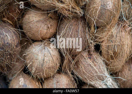 Coconuts on the market in Mumbai, India - Stock Photo