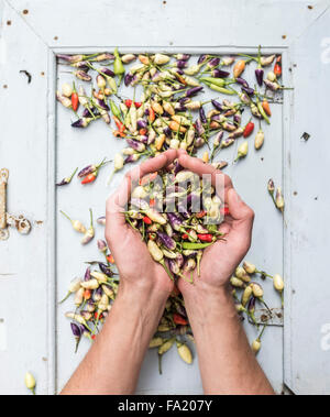 Man's hands keeping handful of small hot Turkish chili peppers, top view - Stock Photo