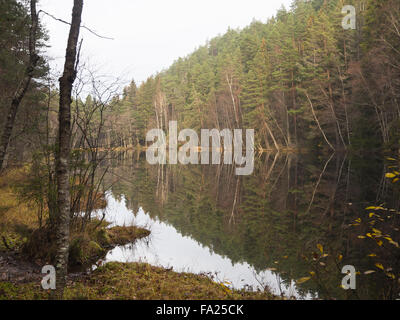 Late autumn in a  forest in Oslo Norway. A small lake, reflections trees and subdued colours - Stock Photo