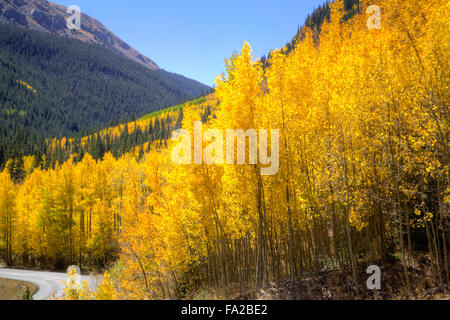 Aspens' fall foliage - Stock Photo