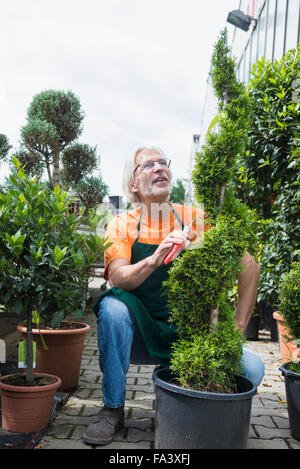 Male gardener pruning a plant in greenhouse, Augsburg, Bavaria, Germany