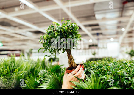 Cropped image of young woman holding potted plant in garden center - Stock Photo