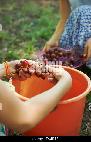 Group of friends washing red grapes in bucket of water at picnic, Munich, Bavaria, Germany - Stock Photo