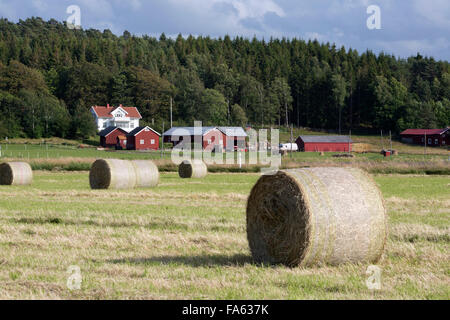 Typical Swedish farm with round hay bales, near Kode, Bohuslan, southwest Sweden, Sweden, Europe - Stock Photo