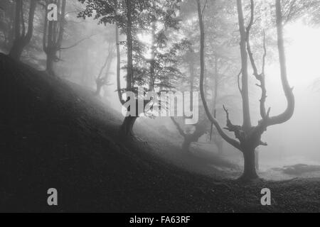 mysterious creepy forest in black and white - Stock Photo