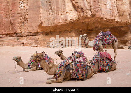Camels in the Treasury Area, Petra, UNESCO World Heritage Site, Jordan - Stock Photo