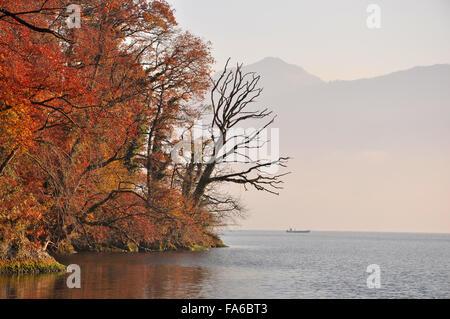 Trees on bank of Lake Zug, Switzerland - Stock Photo