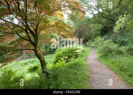 The Tree Walk at Monk Coniston Hall (Hotel) - Stock Photo