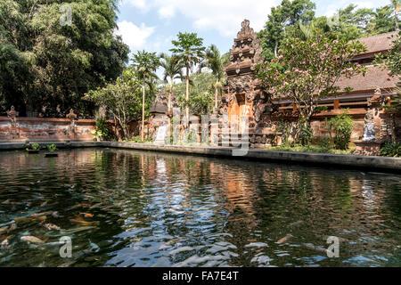 fish pond at the Hindu water temple Tirta Empul near Ubud, Bali, Indonesia - Stock Photo