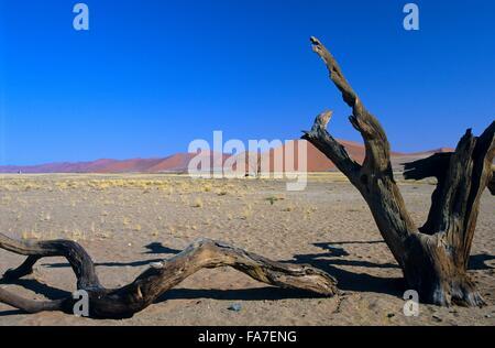 Namibia, Namib-Naukluft National park, Sesriem, near dune 45, dead acacia tree // Namibie, Namib-Naukluft National - Stock Photo