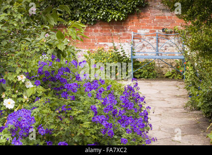 A pale blue bench and deep blue geraniums contrast with the terracotta hues of an old red brick wall, at Hidcote - Stock Photo