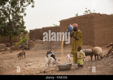 A mother winnows grain in Niassan village, Burkina Faso. - Stock Photo