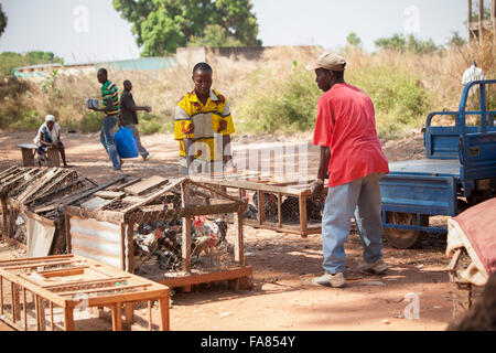 A vendor loads chickens onto his trailer at the poultry market in Banfora, Burkina Faso. - Stock Photo
