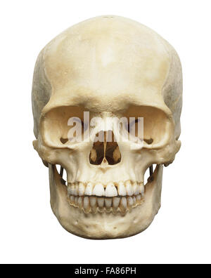 Human skull, front view - Stock Photo