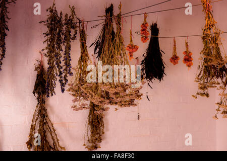 Bunches of dried flowers hanging upside down during the process of drying flowers. - Stock Photo