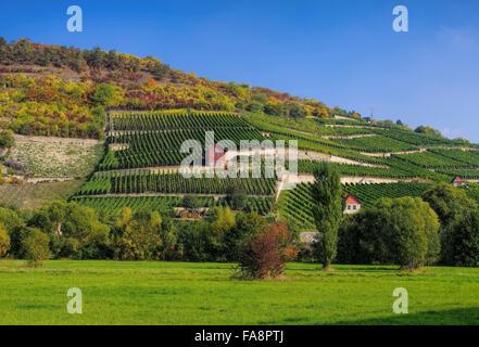Saale Unstrut Weinberge - Saale Unstrut vineyards 06 - Stock Photo