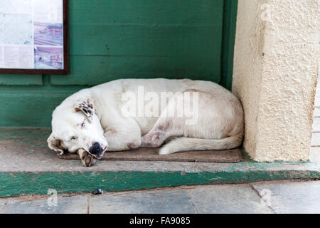 Street dog, sleeping at the entrance to an ancient site in Athens, Greece - Stock Photo