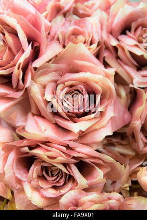 Background consists of artificial roses made and hand painted. - Stock Photo