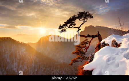 Alone single pine tree at Sokolica cliff Pieniny National Park at sunset, Poland - Stock Photo