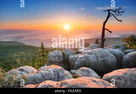 Single alone tree landscape at Sudety Mountains at sunrise, National Park, Poland