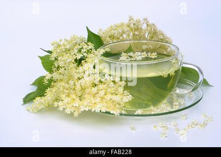Tee Holunderblüte - tea elder flower 04 - Stock Photo