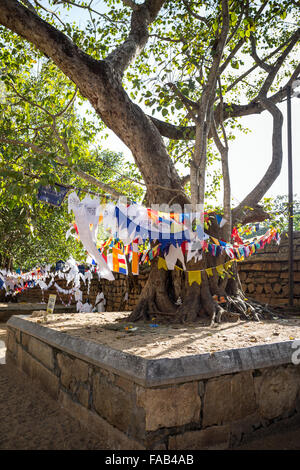 Flags and offerings at Sri Maha Bodhi (sacred bodhi tree), Anuradhapura, North Province, Sri Lanka,  UNESCO world - Stock Photo