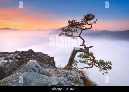 Single alone tree at Pieniny Mountains, Poland - Stock Photo
