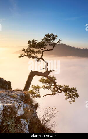 Alone tree at Pieniny Mountains, Poland - Stock Photo