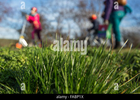 Holzhausen, Germany. 26th Dec, 2015. Children play on a green lawn during the unusual warm winter season near Holzhausen, - Stock Photo