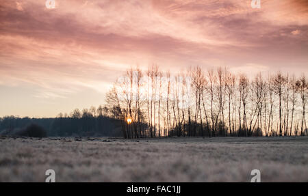 Red Warm Sunrise Clouds and Sun Rising From Behind Blurry Trees, Defocused Landscape,  Shallow Depth of Field - Stock Photo