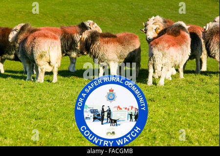 Herdwick rams in the Lake District UK with a police country watch sign. - Stock Photo