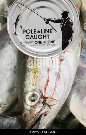 A sustainably caught Tuna on Funafuti, tuvalu and a pole and line caught Tuna can. - Stock Photo