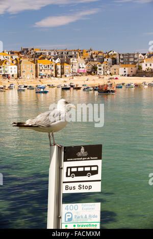 St Ives harbour at high tide, Cornwall, UK with a Herring Gull on a bus stop sign. - Stock Photo