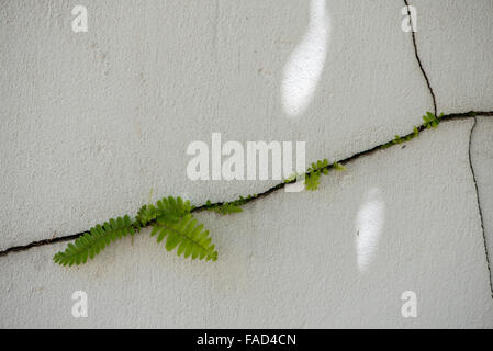 Plants Growing Through Cracks In Stone Wall Stock Photo