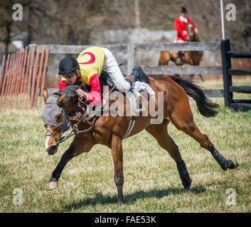 Horses racing at Manor Races 2015 - Stock Photo